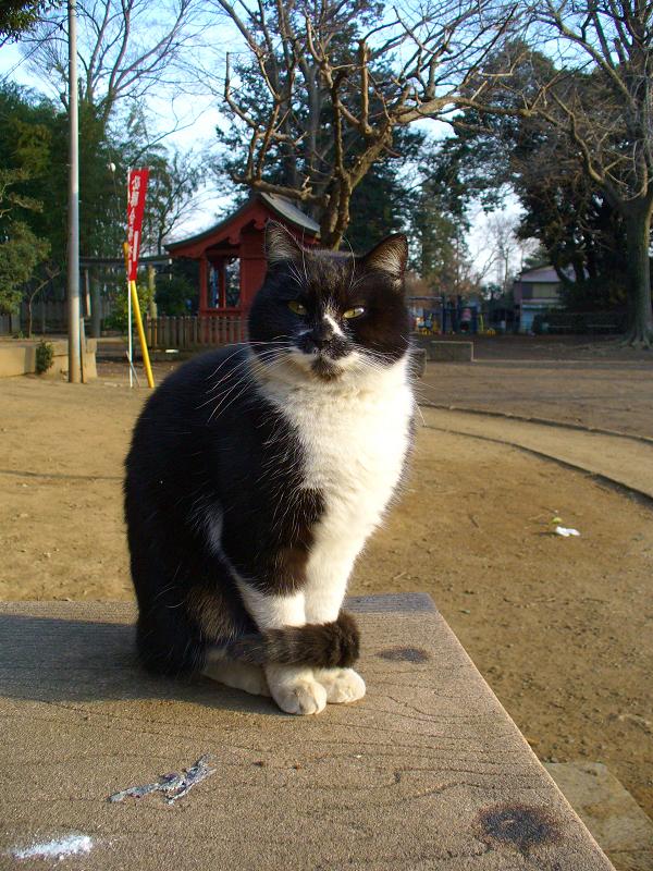 ベンチで触られる黒白猫1