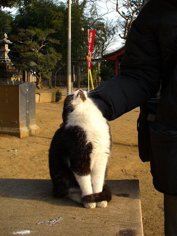 ベンチで触られる黒白猫2