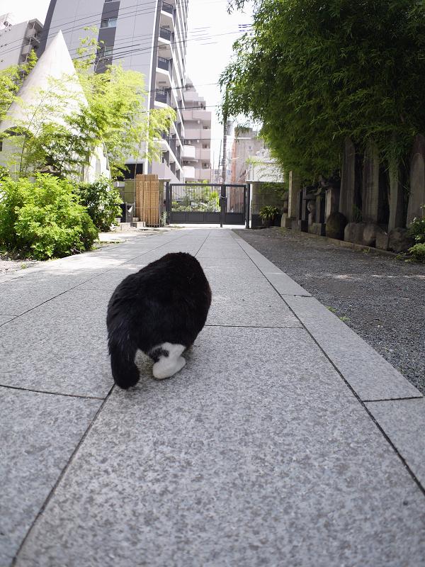 裏参道黒白猫1