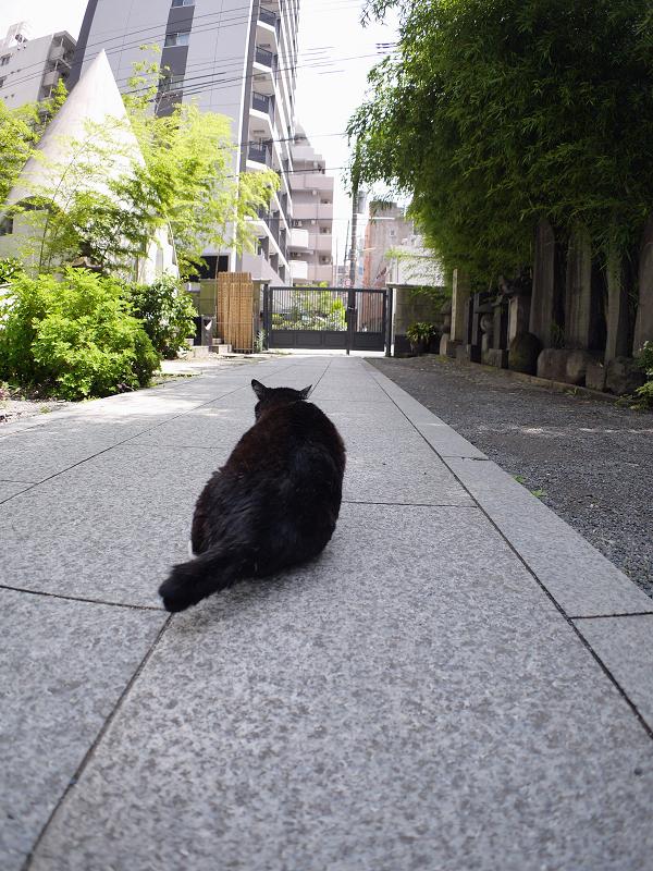 裏参道黒白猫2