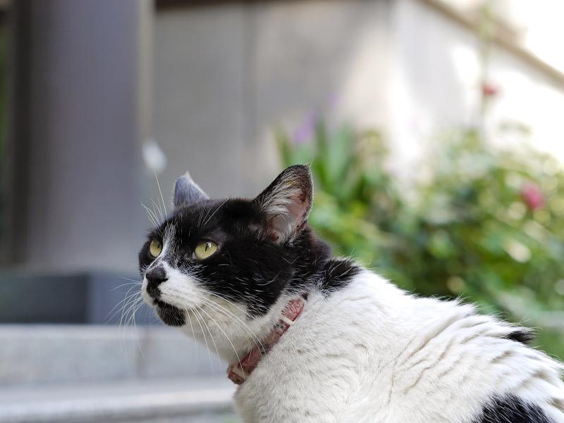 お堂前の白黒猫2