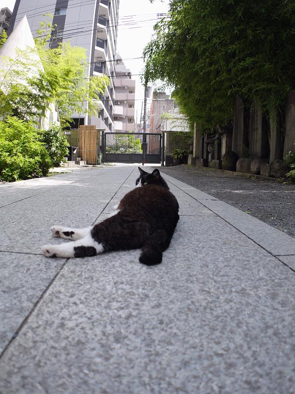 裏参道黒白猫3