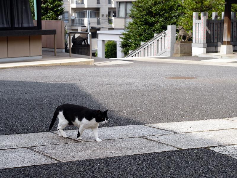 神社境内は黒白猫2