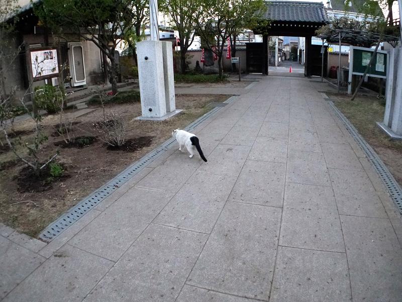 参道を横切る白黒猫2