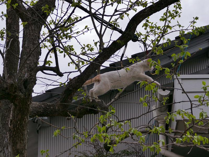 木から飛び移った白茶猫2