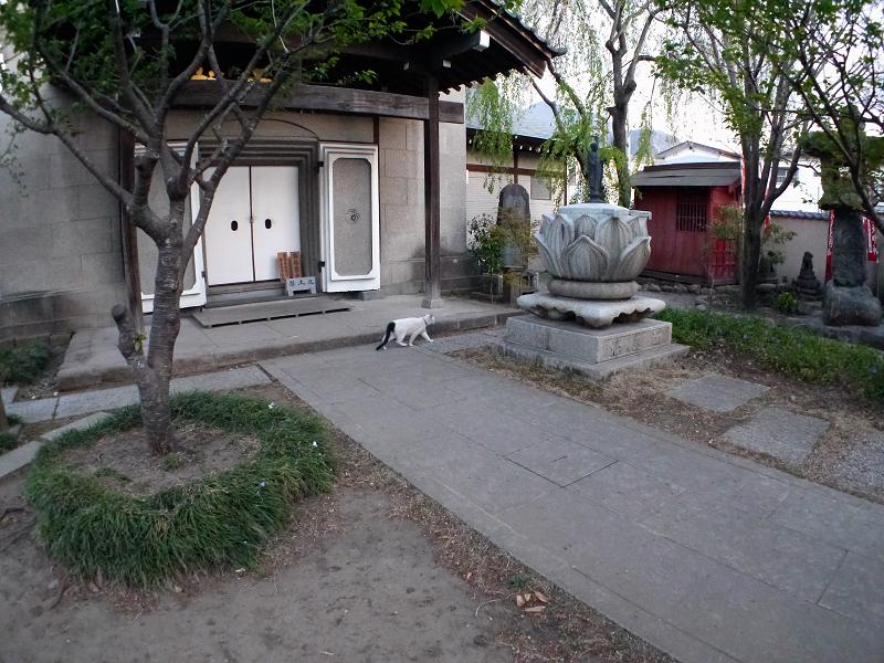 参道を横切る白黒猫3