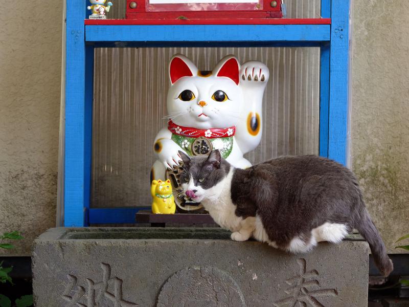 招き猫手水グレー白猫3