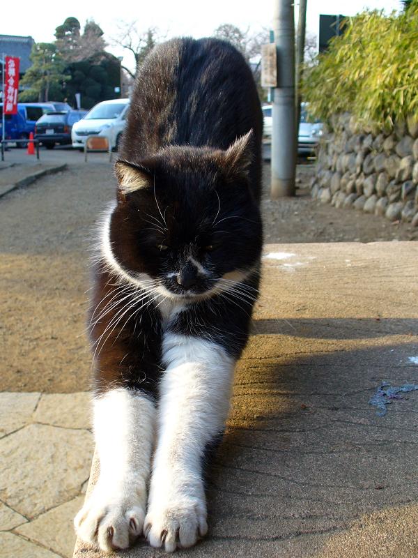 ベンチで前伸びする黒白猫2