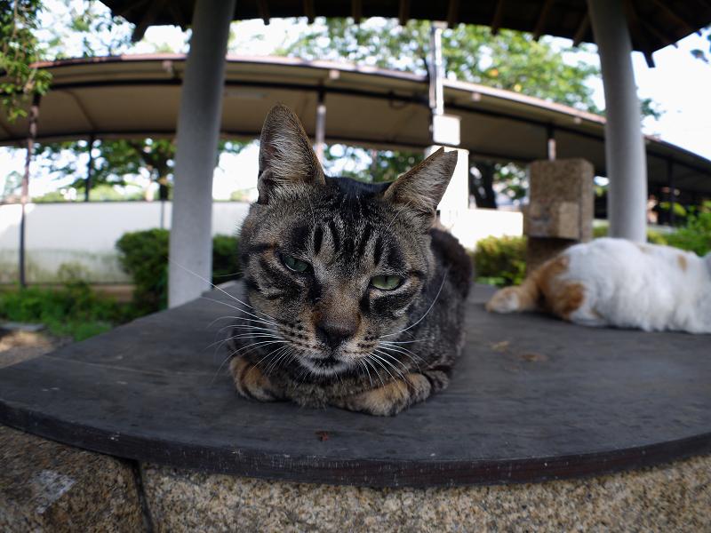 井戸とキジトラ猫3