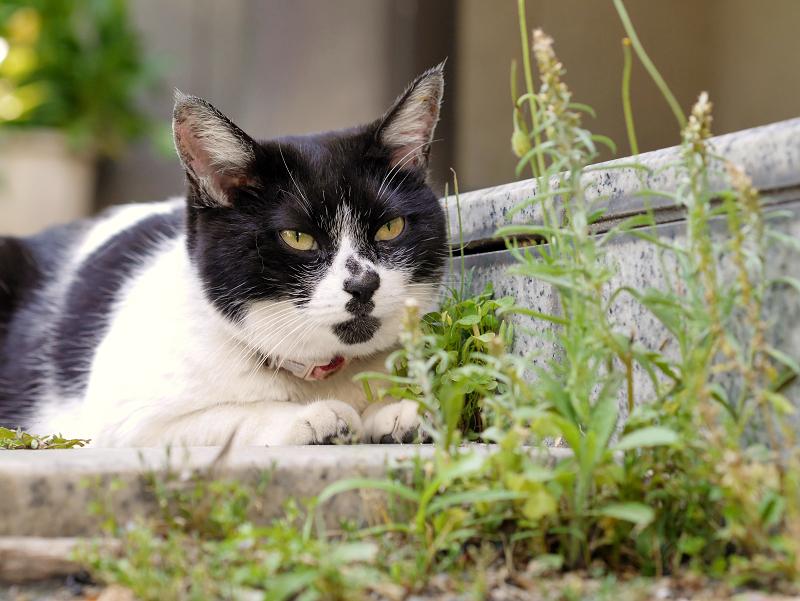 お堂前階段の白黒猫1