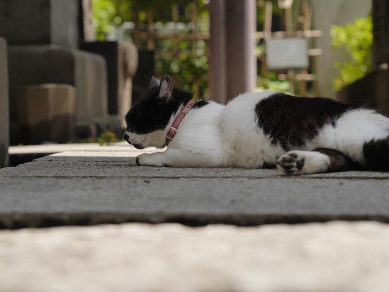 参道日陰と白黒猫1