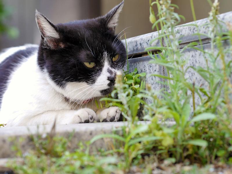 お堂前階段の白黒猫2