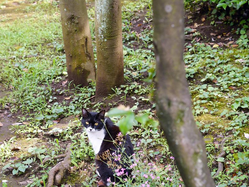 神社草むら茂みの猫1