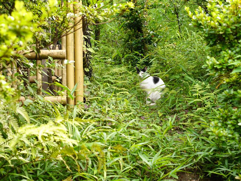 神社草むら茂みの猫2