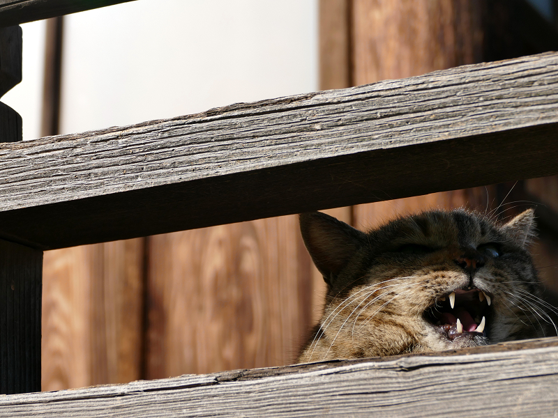 欄干から鳴く猫のローアングル2