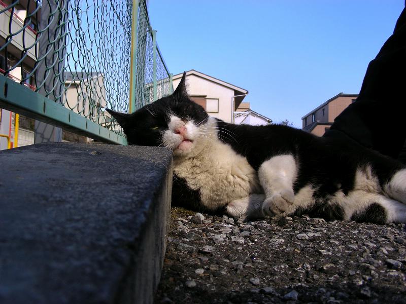 縁石と黒白猫1