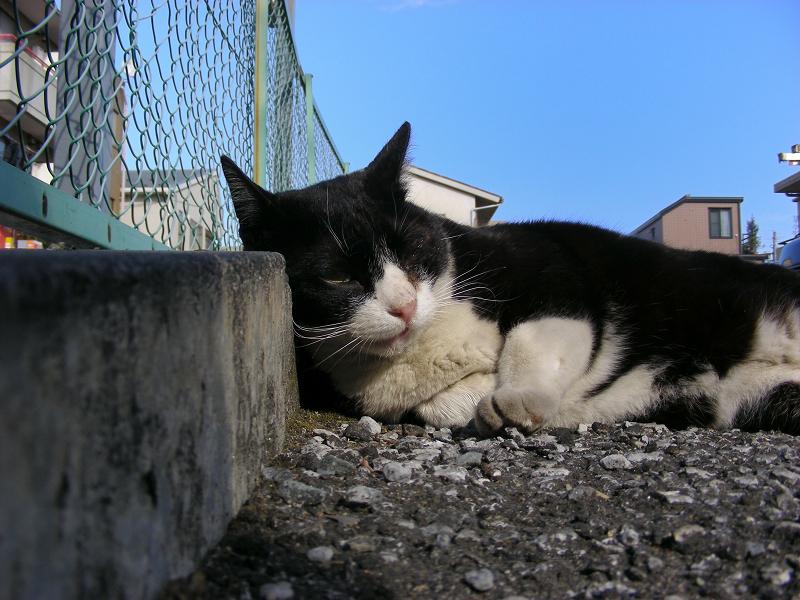 縁石と黒白猫2