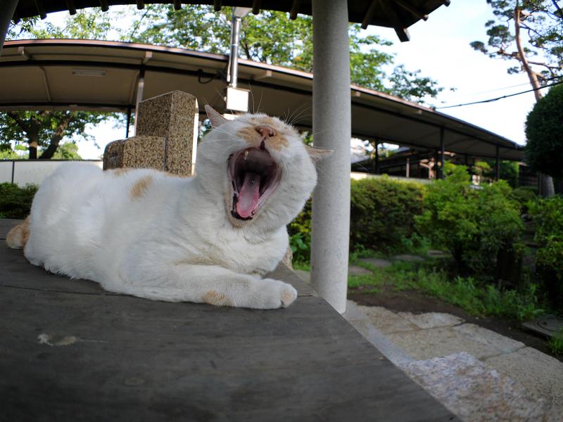 井戸と白茶猫2