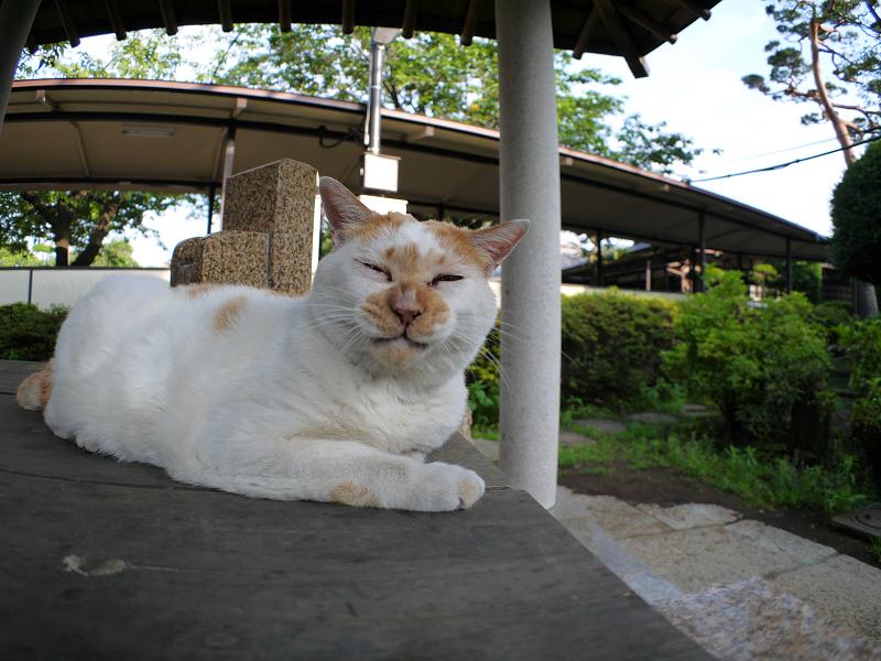 井戸と白茶猫3