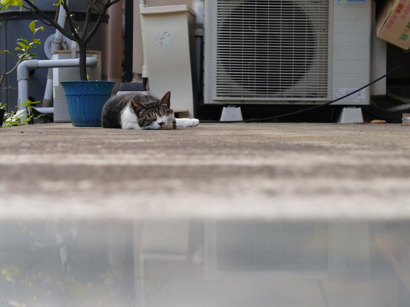 室外機とキジ白猫