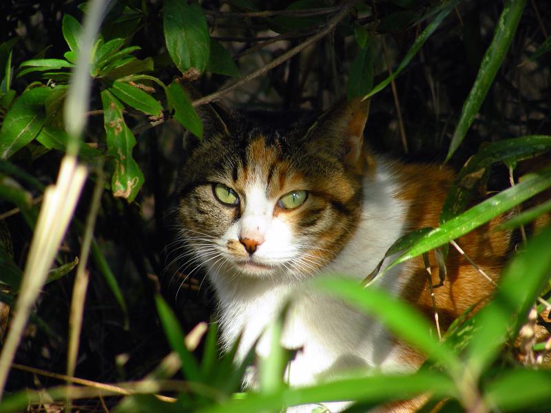 木の根元茂みの三毛猫3