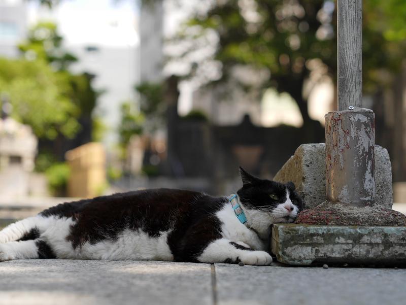 参道でマッタリの黒白猫1