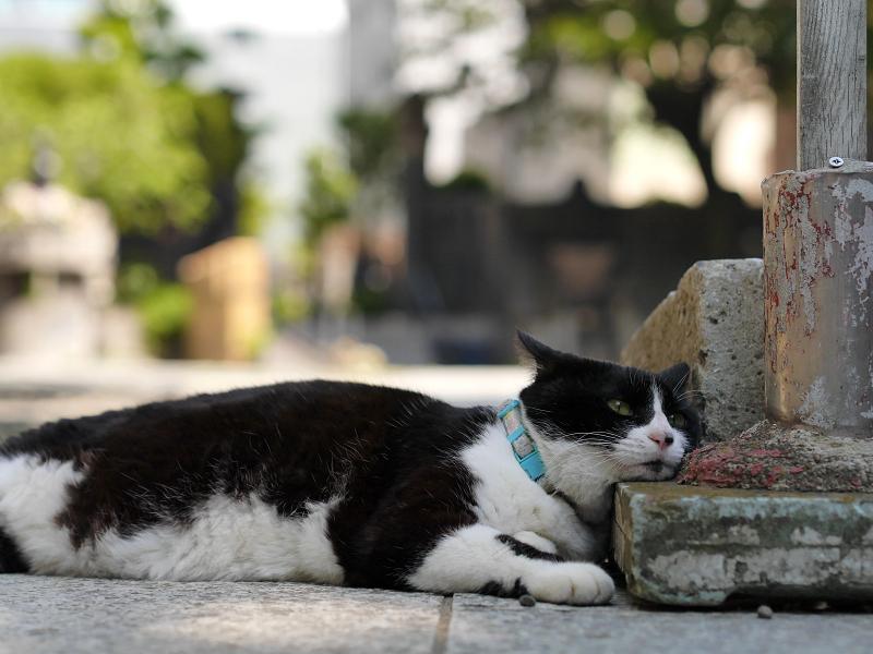 参道でマッタリの黒白猫2