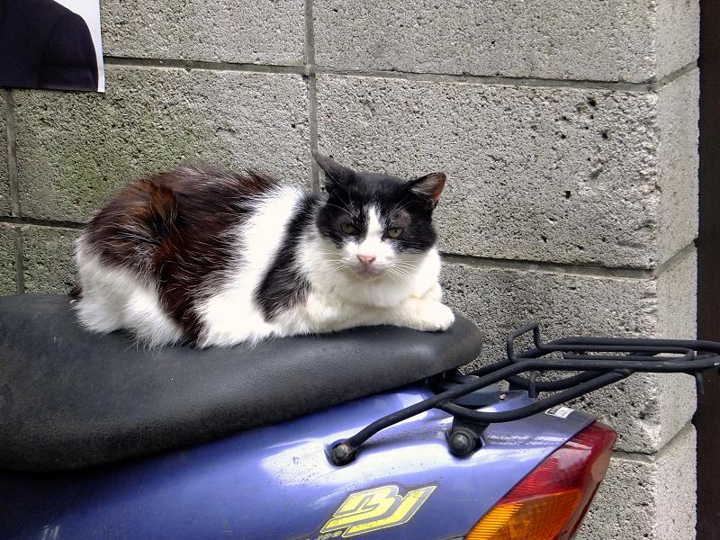 スクーターと黒白猫