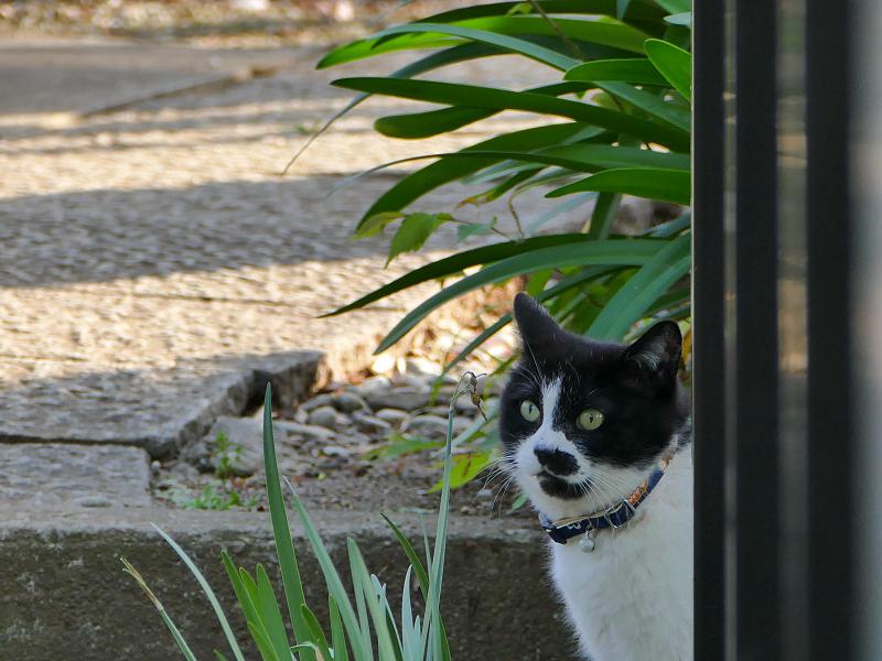 柵の影の黒白猫2