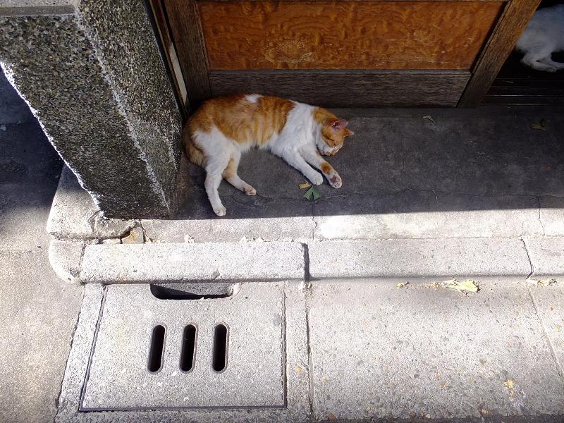 扉前の茶白猫1