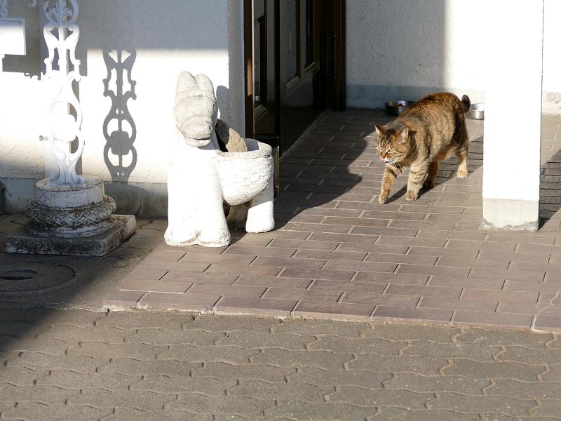 白い民家の玄関先のキジトラ猫1