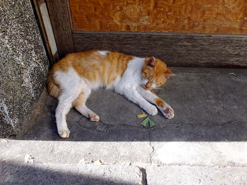 扉前の茶白猫2