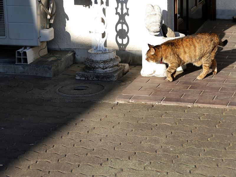 白い民家の玄関先のキジトラ猫2