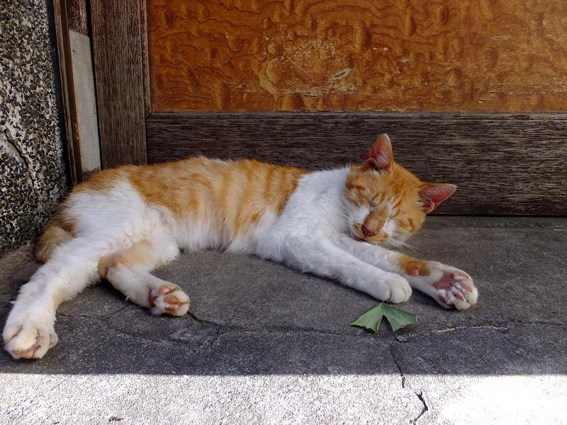 扉前の茶白猫3