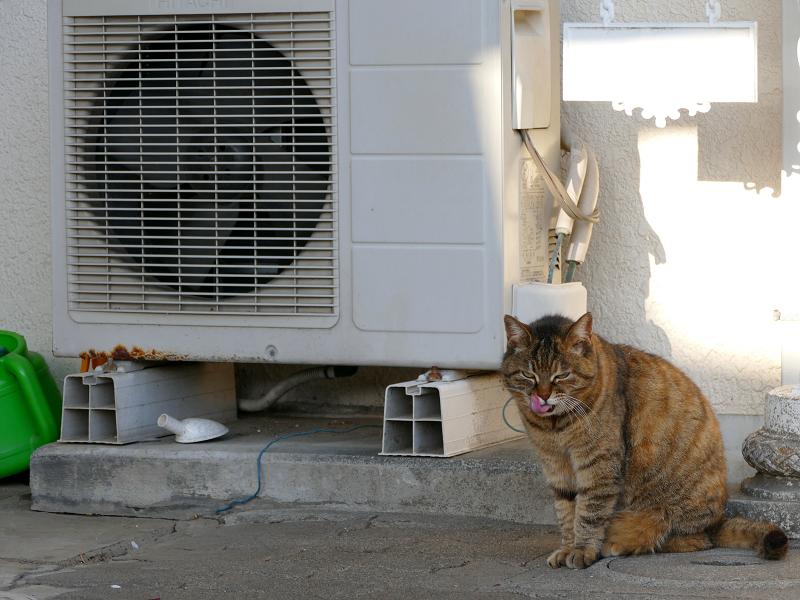 白い民家の玄関先のキジトラ猫3