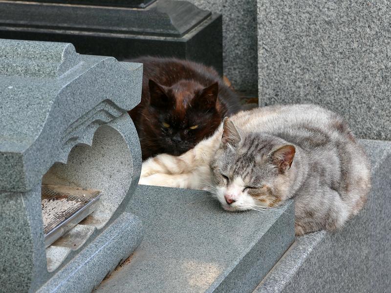 墓苑の黒猫とグレー猫1
