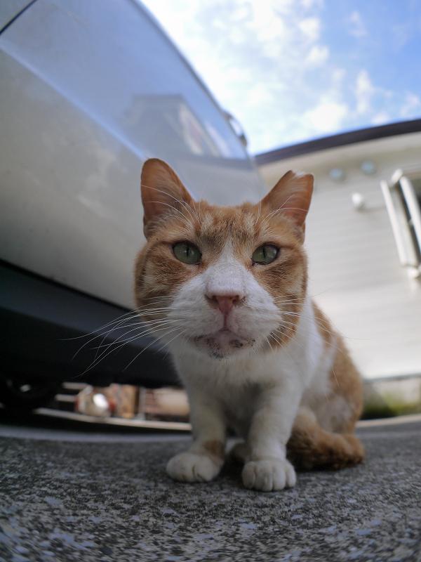 ローアングル茶白猫2