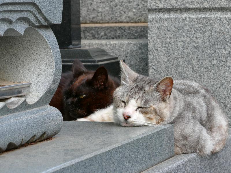 墓苑の黒猫とグレー猫2