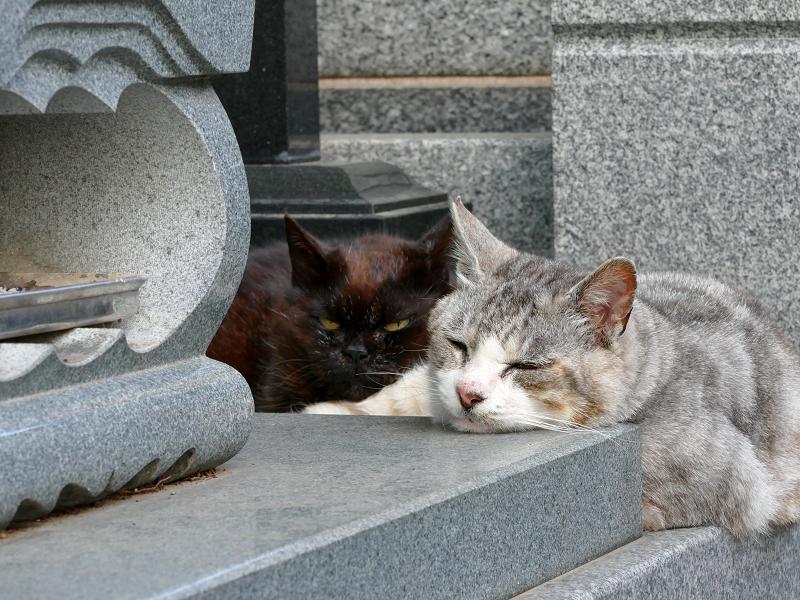 墓苑の黒猫とグレー猫3
