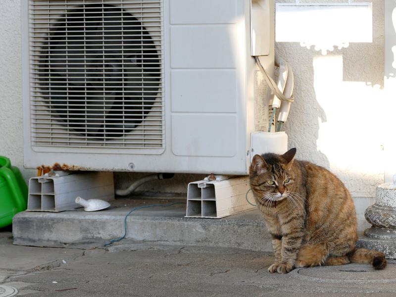 室外機とキジトラ猫1