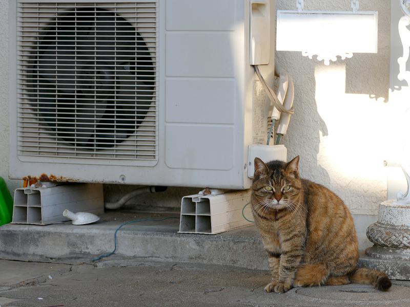 室外機とキジトラ猫2