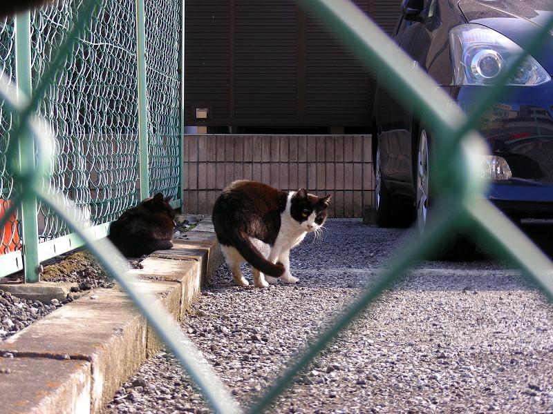 駐車場と金網フェンスと猫1