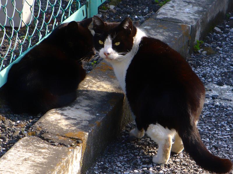 駐車場と金網フェンスと猫2