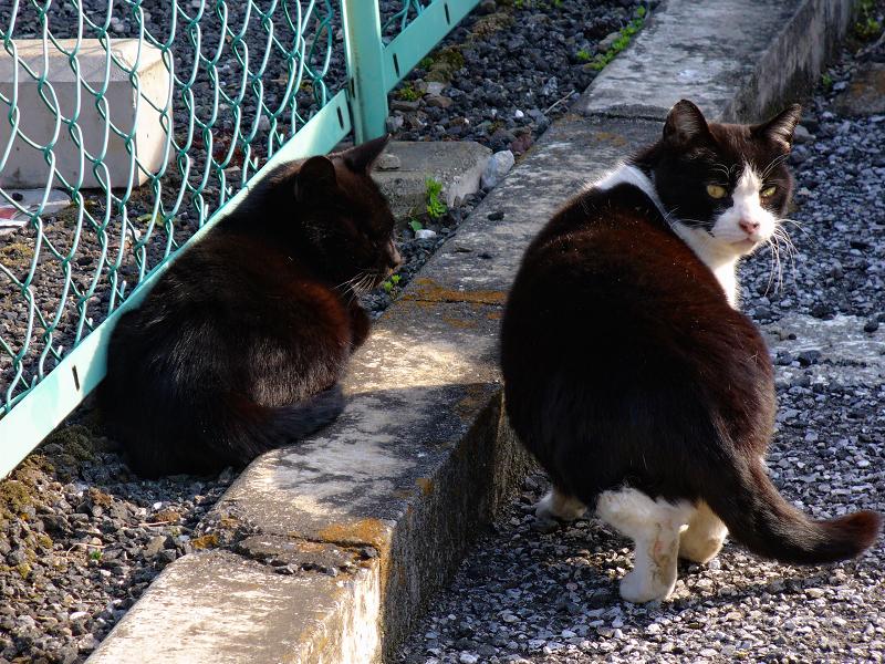 駐車場と金網フェンスと猫3