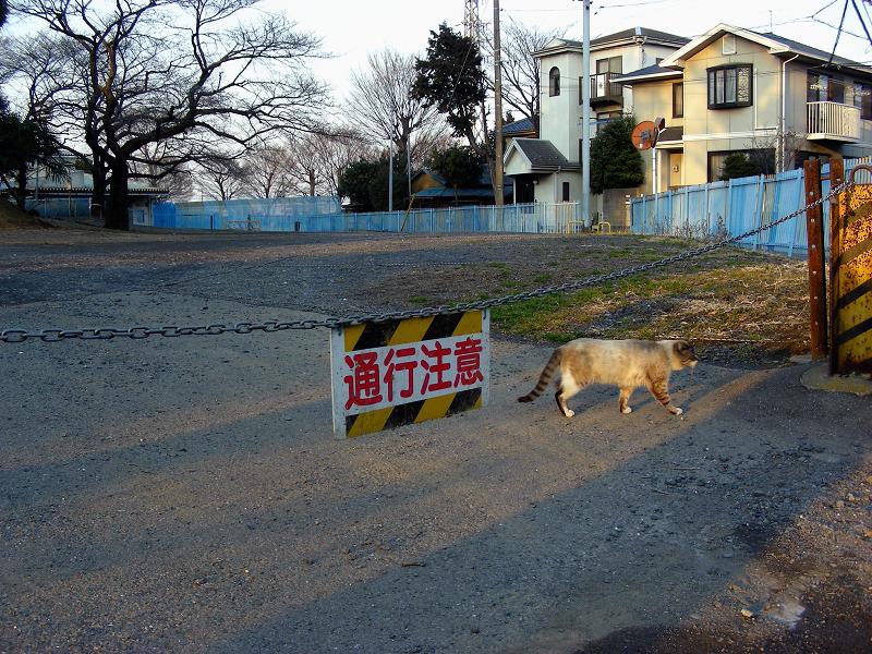 住宅地を行き来する猫たち1