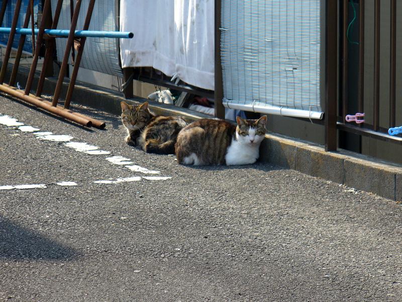 青空ガレージの猫たち1