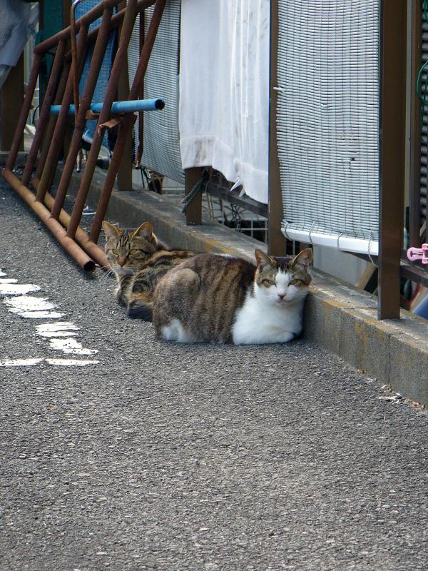 青空ガレージの猫たち2