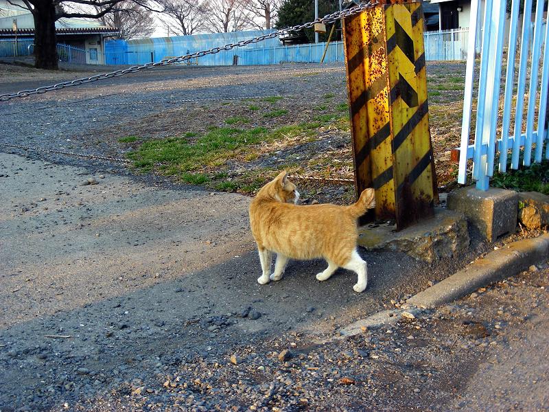 住宅地を行き来する猫たち3