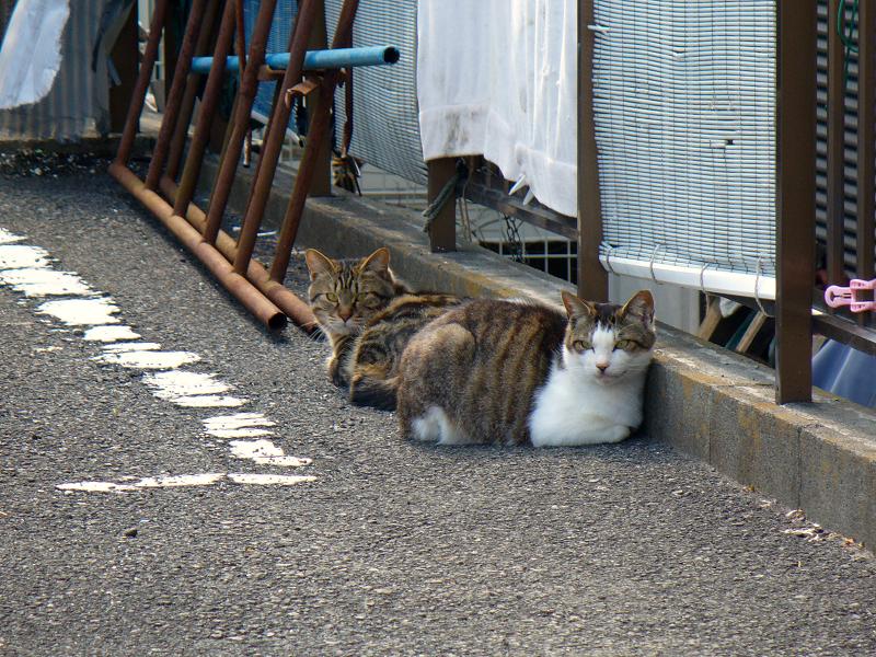 青空ガレージの猫たち3