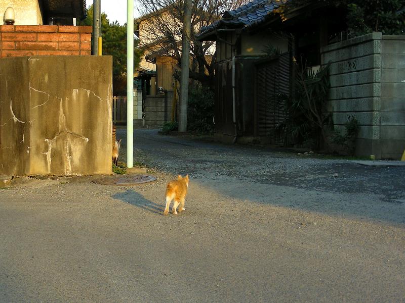 住宅地を行き来する猫たち4